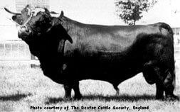 1: Dexter Bull